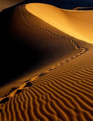 Photo de L'Exode, un voyage qui se perpétue