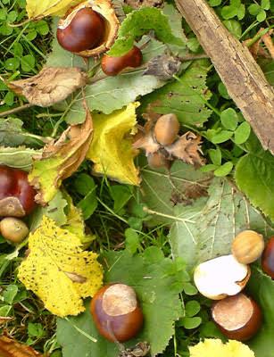 Photo of Bien vivre l'automne