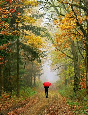 Photo de L'automne : Comment traverser cette saison en pleine forme ?